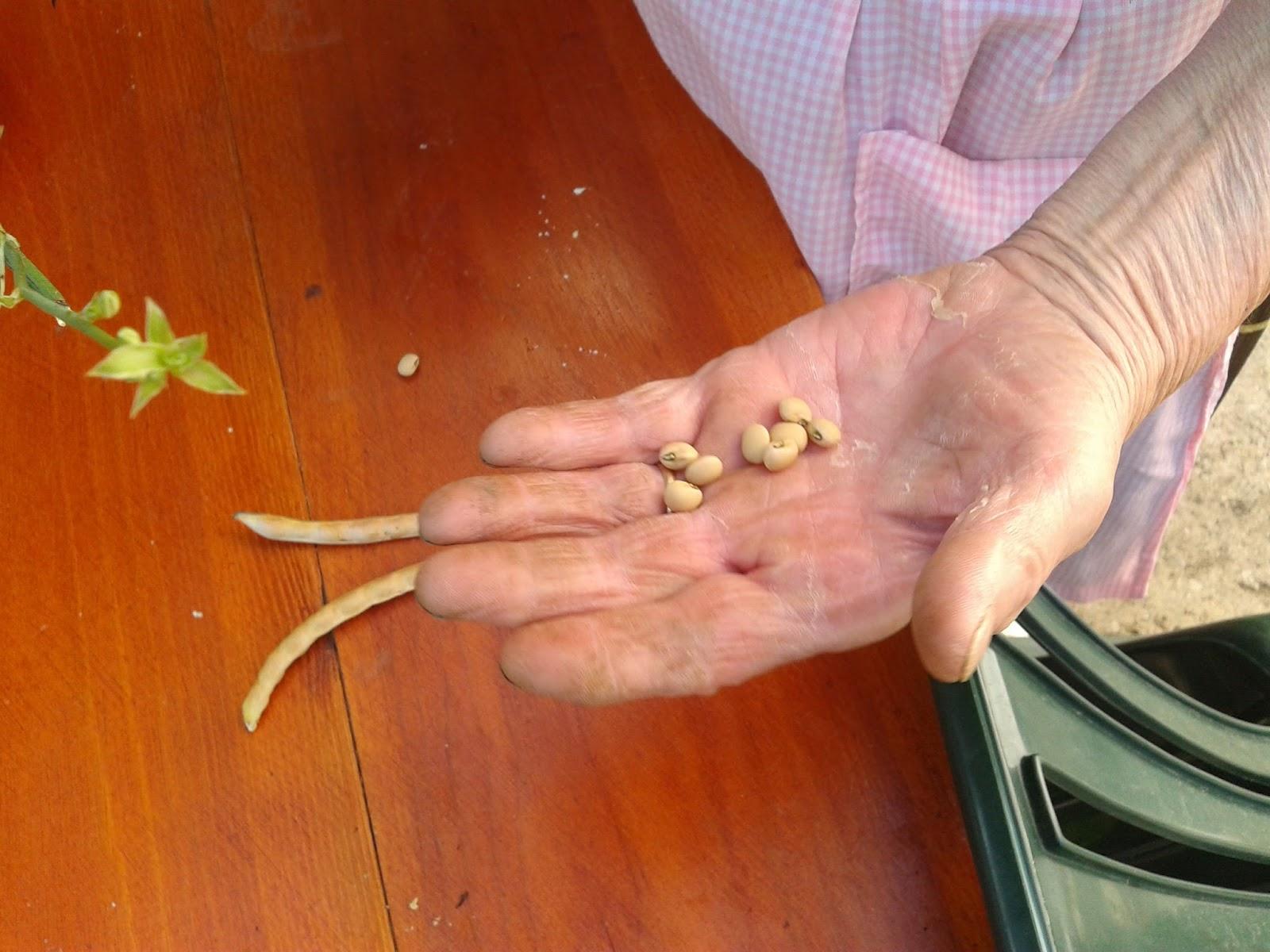 biodinamica guia practica para agricultores y aficionados guias para la fertilidad de la tierra