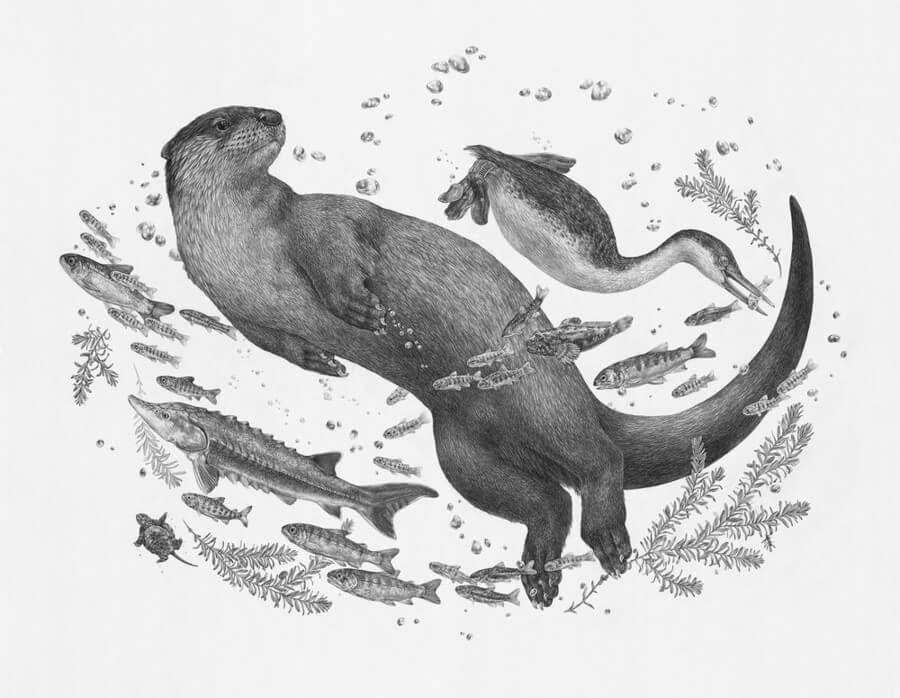 03-River-Otter-Zoe-Keller-www-designstack-co