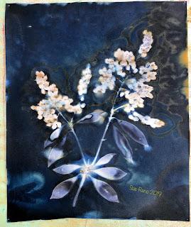 Wet cyanotype_Sue Reno_Image 587