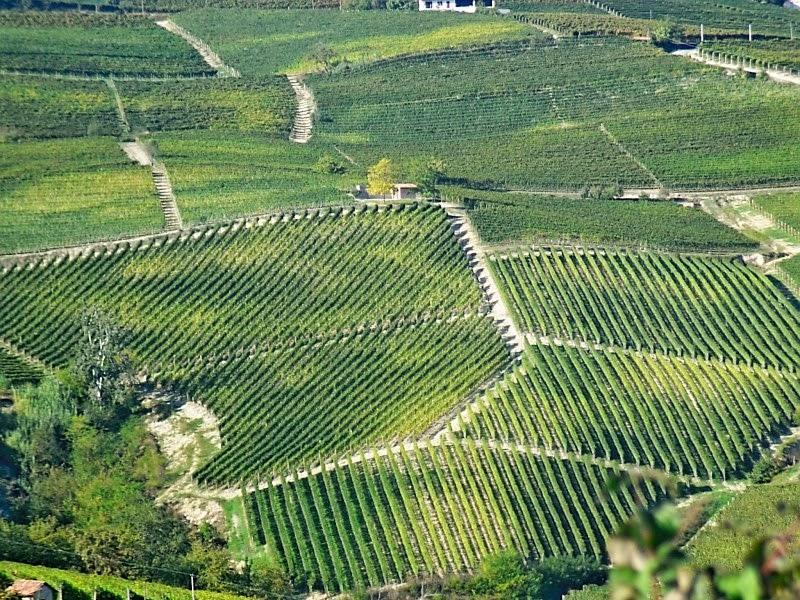 Vineyards in Piedmont