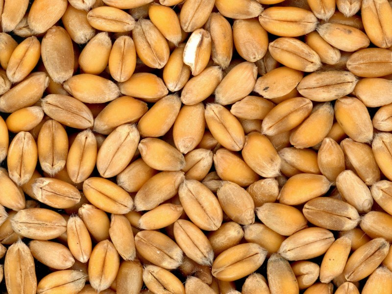 Download Grain Seeds HD wallpaper. Click Visit page Button for More Images.