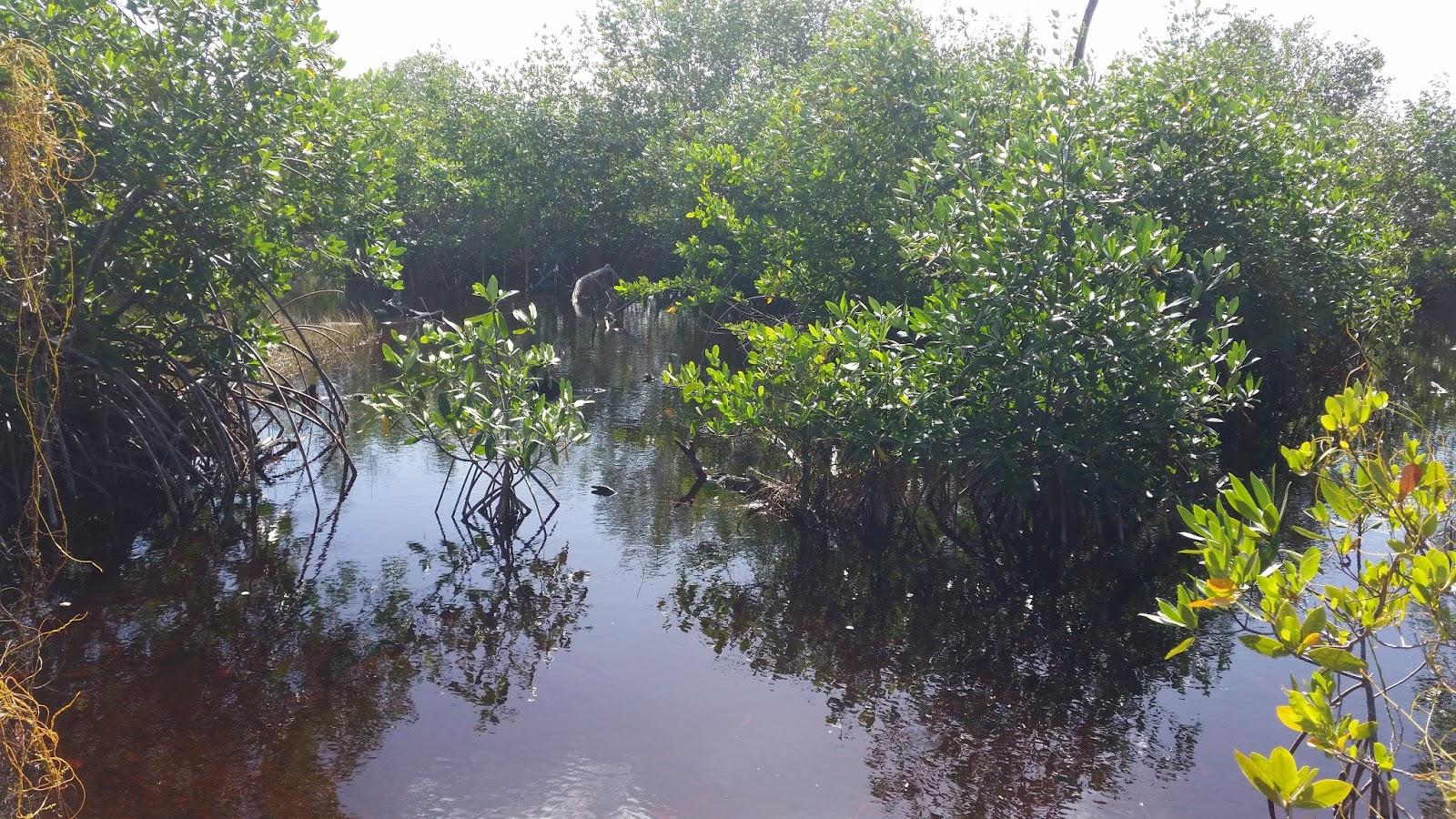 Dominikana las namorzynowy