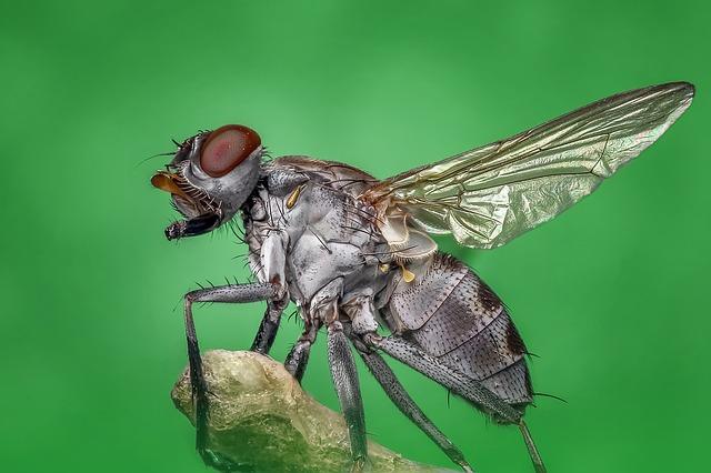cara halau lalat berkesan