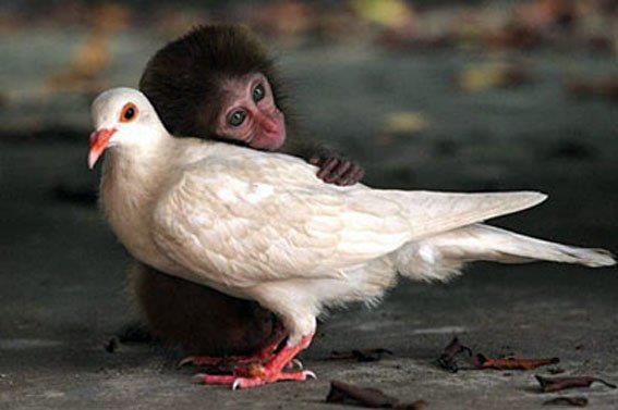 Pictures Of Funny Animals: Funny Pictures Of Animals Hugging