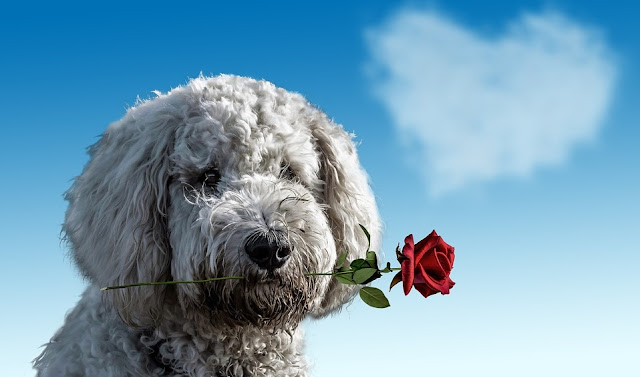 Image: Valentine's Day Dog, by Annca Schweiz on Pixabay
