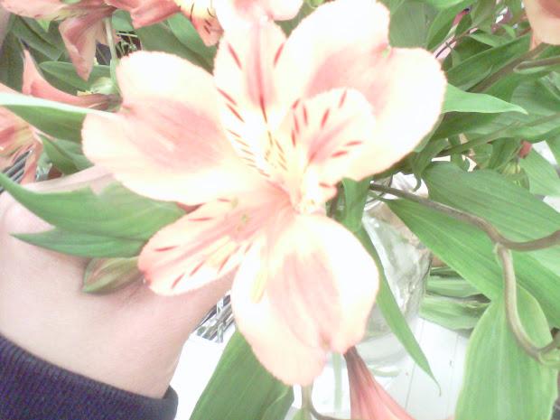 Bio 11 Botany Project
