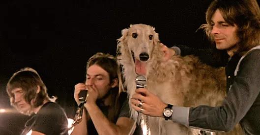 Seamus dog Pink Floyd