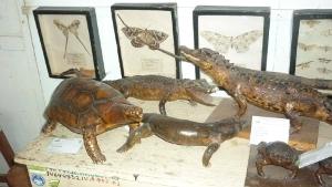 Museo de Zoología de la de la UNAS