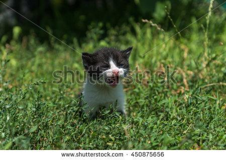 Bagaimana Cara Agar Kucing Tidak Jahat Sama Kita