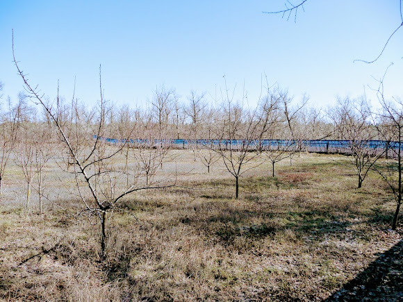 Днепропетровская область, Царичанский район, с. Китайгород. Остатки крепостных валов