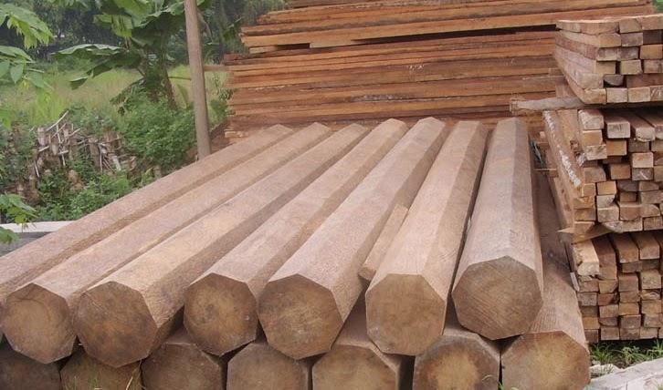 jenis terbaik kayu jati