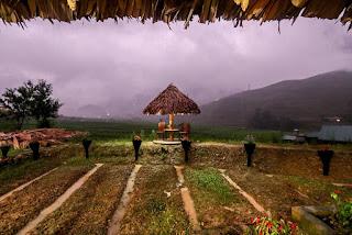 Golden-Rice-Garden