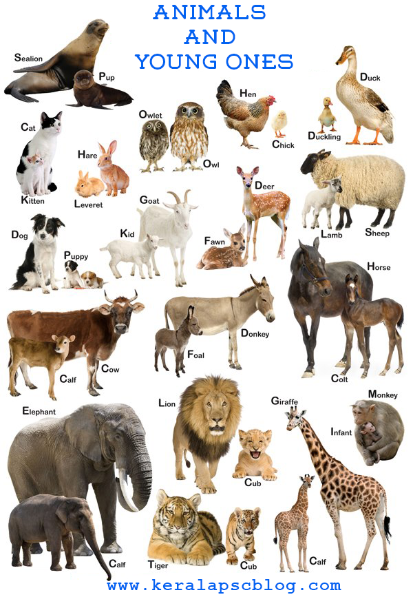 Animals Names and Young Animals Names