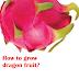 How to grow dragon fruit?