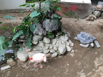 草津熱帯園 亀とフラミンゴ