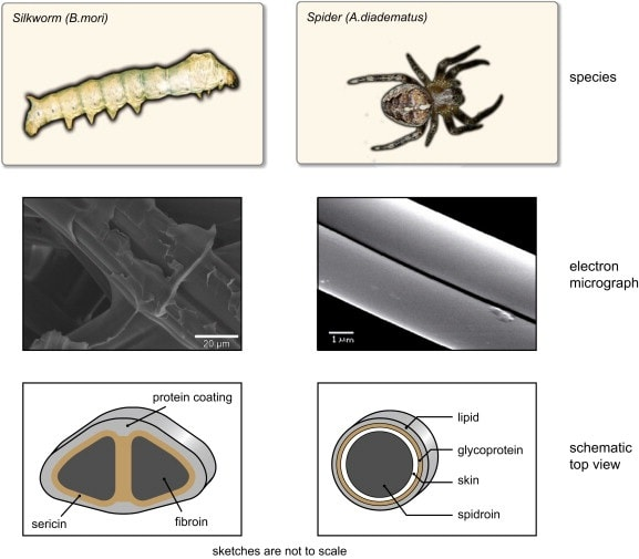 Microscopic view of silk