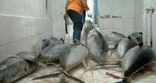 cara memasak ikan tuna asam manis,cara memasak ikan tuna untuk balita,cara memasak ikan tuna goreng,resep ikan tuna rica rica,cara memasak ikan tuna untuk ibu hamil,