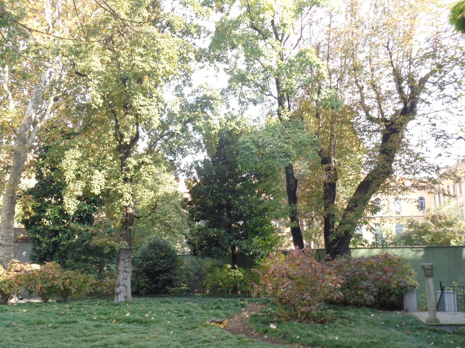 Piante alto fusto sempreverdi alberi ad alto fusto quali for Alberi da terrazzo sempreverdi