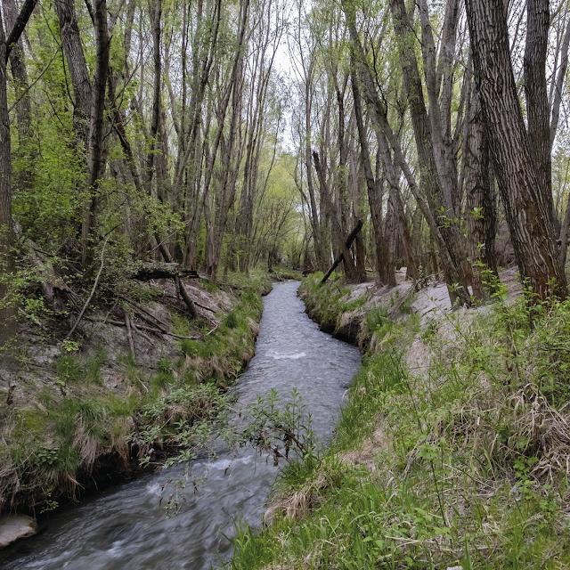 secret wood | danube river banks © Chris Zintzen | panAm productions