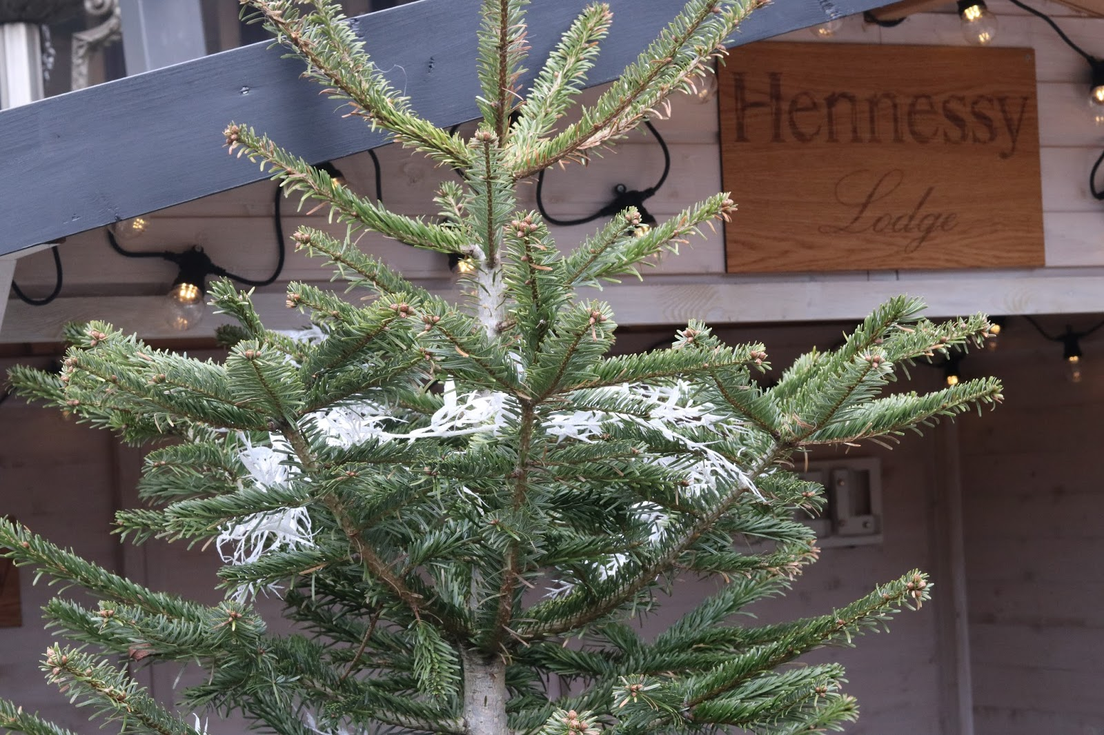 The Winter Garden, The Four Seasons Hotel, Park Lane, London