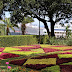 game colors on Quinta Vigia garden