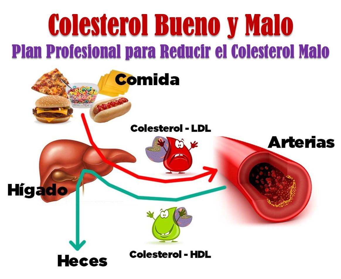 Luis adelgazar rapido las dos fuentes de colesterol plan para bajar el colesterol malo - Alimentos que provocan colesterol ...