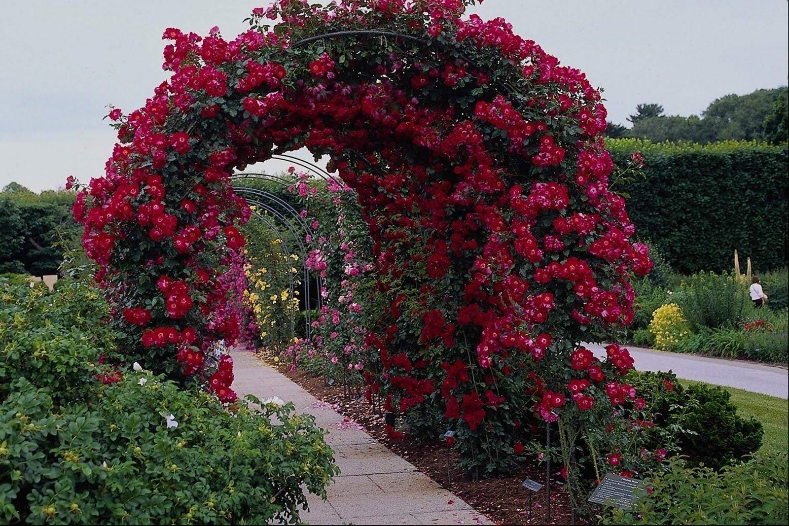 SUN SHINES: Beautiful Flower Garden Wallpapers