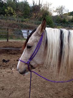 Filet hackamore en corde tête petit cheval