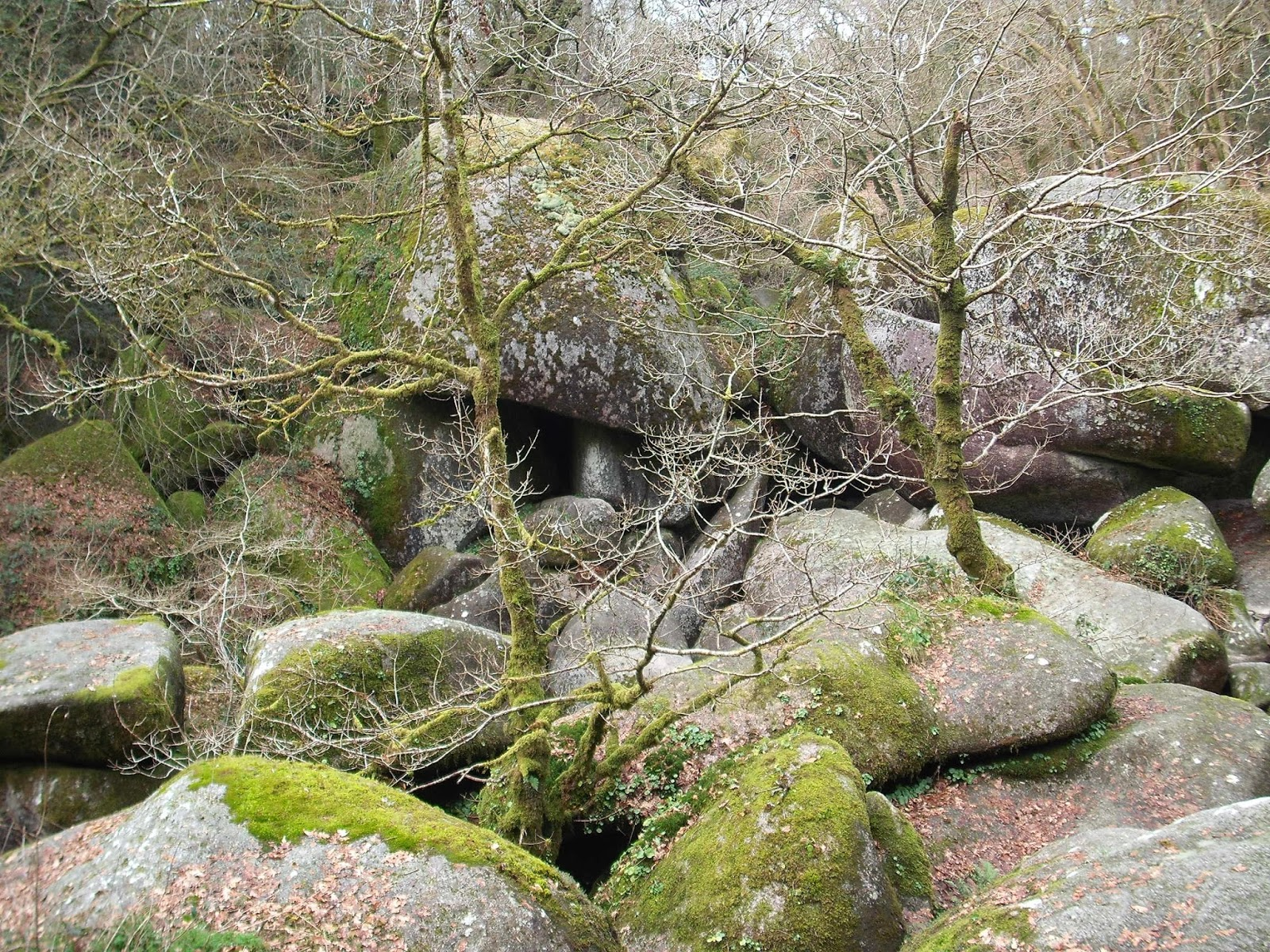 Huelgoat Forest, Brittany, France