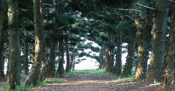 台中沙鹿|九天黑森林-神秘但卻是婚紗照和外拍的熱門景點