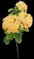 Flor Ixoria amarela em png