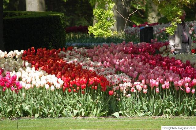 Keukenhof 2015 парк тюльпанов в Голландии