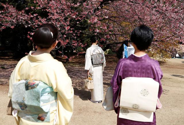 Οι κερασιές ανθίζουν νωρίτερα φέτος στο Τόκιο