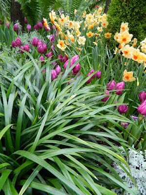 Purple tulips and apricot daffodils at the Allan Gardens Conservatory 2018 Spring Flower Show by garden muses-not another Toronto gardening blog