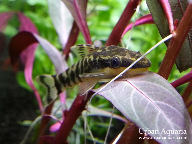 urban aquaria 32 litre