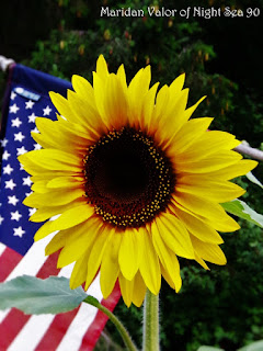 Sunflower and American Flag.