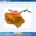 حل مشكلة نوع جديد من صيغ الصور WebP
