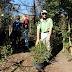 Aposentado doa duas mil mudas de árvores para o Município