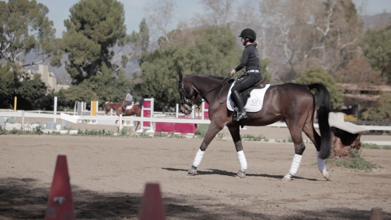 how a horse changed my life The secret weapon that changed my life in and out of horses july 14, 2018 / 0 comments happiness and healing with reiki place the power of the universe here.