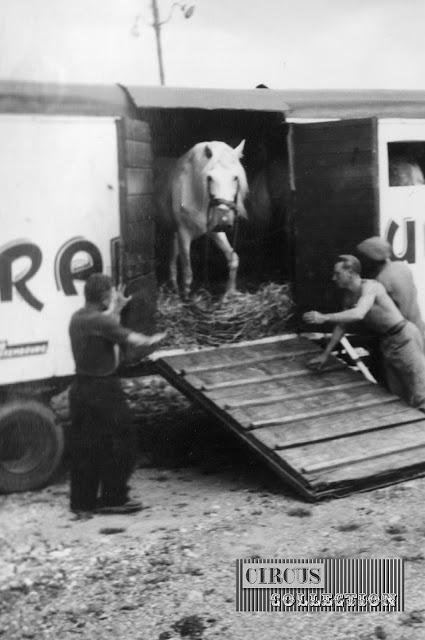les chevaux sortent des bétaillères