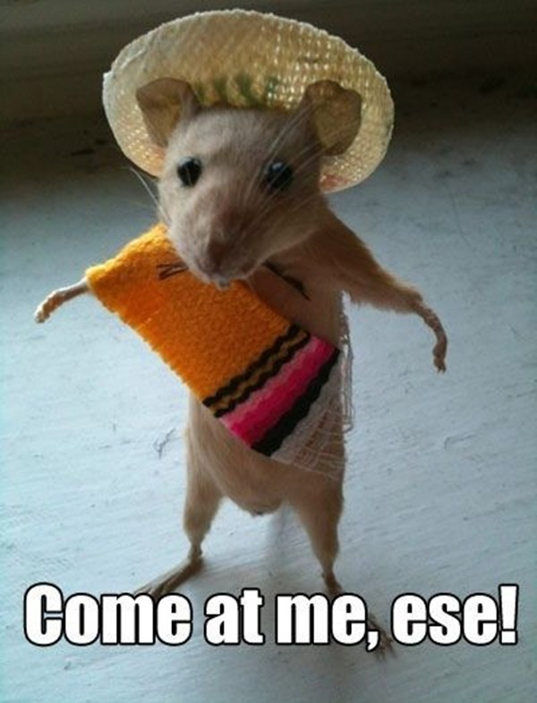 Funny Animal Captions  Pics