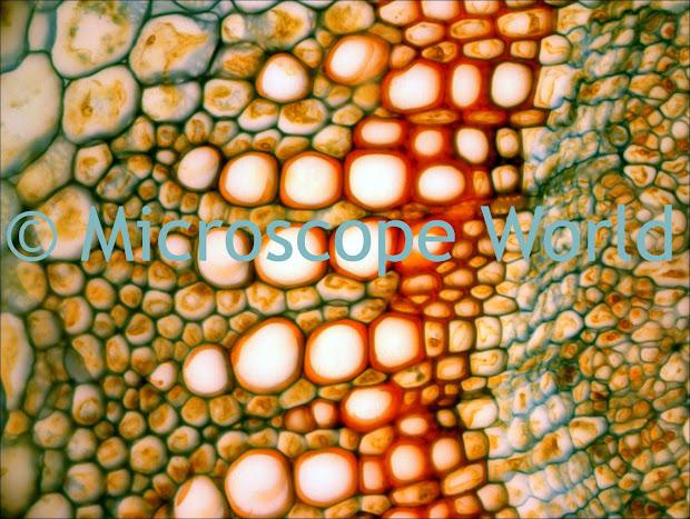 Microscope World July 2011
