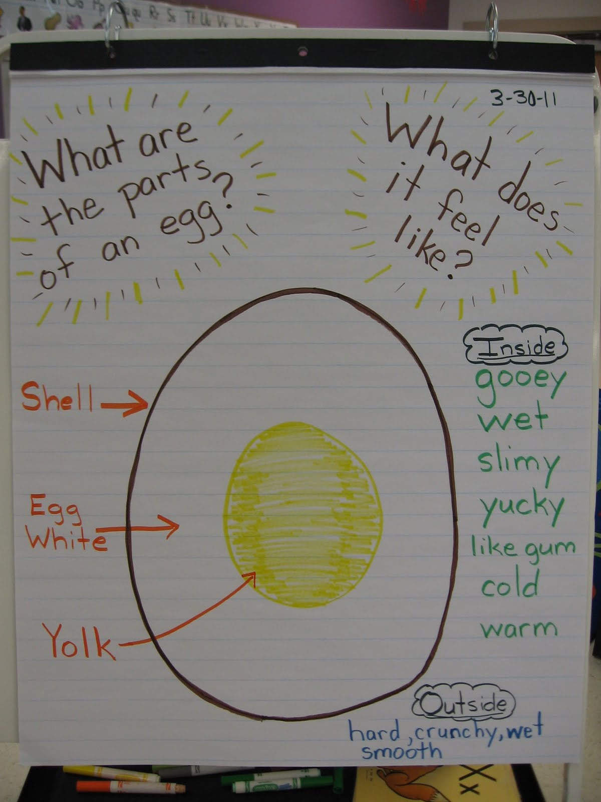 Learn Play Pre K What S Inside An Egg