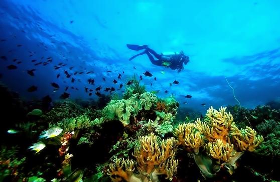 diving di wakatobi, keindahan bawah laut wakatobi, taman bawah laut wakatobi