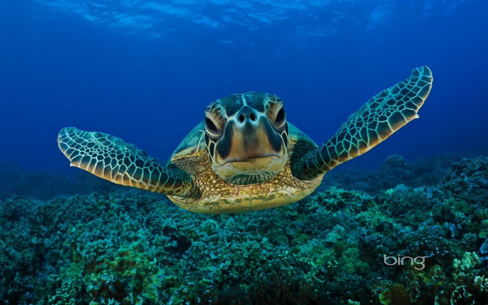http://stilllearningsomethingnew.com/tag/world-turtle-day/