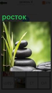 Расположение камней друг на друге сохраняя балансировку и рядом росток небольшой