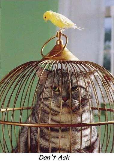 funny picture image joke cat trapped cage budgie