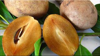 gambar buah sawo manila, sawo