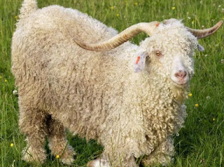 Men jailed for killing goat at petting zoo 'because they were hungry'