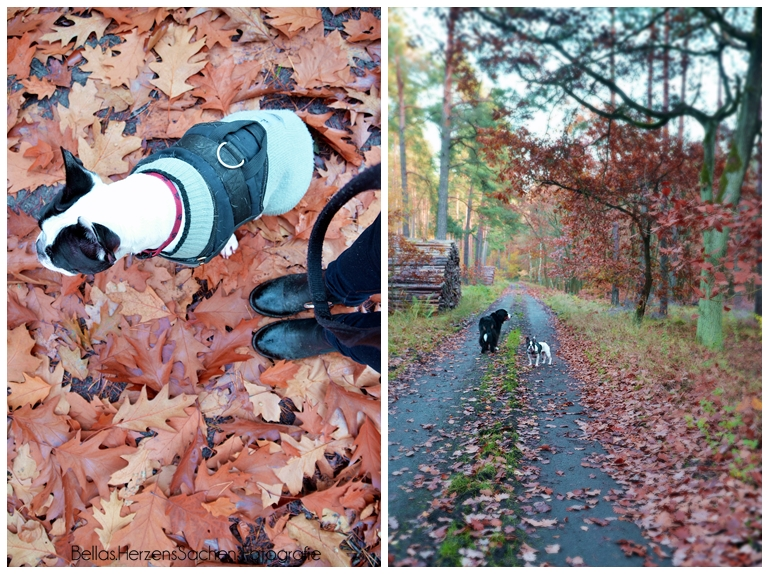 Herbstlaub Wald